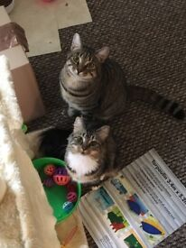 1 x neuted male and 1 x female indoor cats