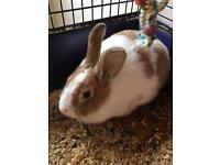 Rabbit/cage