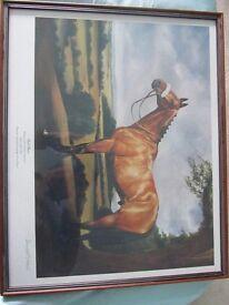 Red Rum - framed print