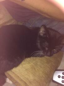 Black n white kitten