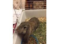 Bunny and rabbit hatch or hamster hatch x2