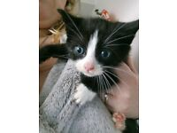 2 kittens 1 male 1 female