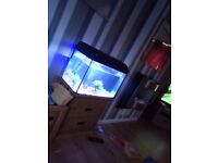 Fish tank 60ltr everything included can deliver
