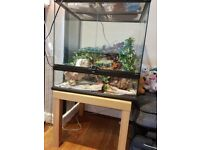 Reptile vivarium 2.5ft x 2ft for Sale
