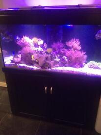 Aquaone ar400 4ft fishtank