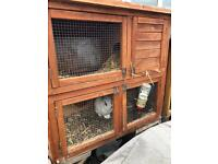 Rabbits and hutches