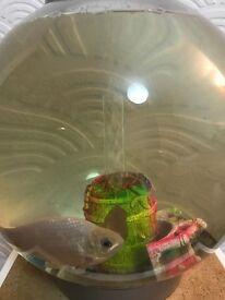Biorb Fish tank and fish bargain!!!
