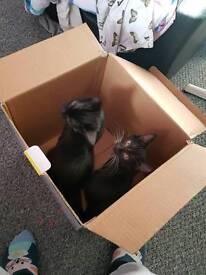 Male or female kitten
