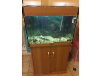 Aqua One Tropical Fish Tank