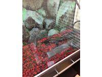 Fluval osaka 260 fish tank for sale
