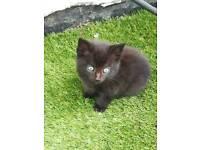 1 cute kitten