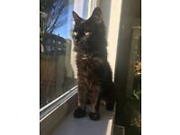 Free to good home beautiful male kitten