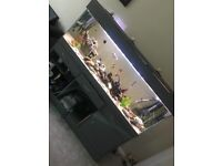 Fish tank and all that you see
