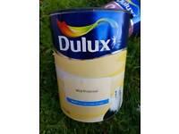Dulux wild primrose