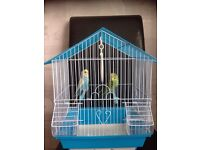 2 baby budgies with cage £50