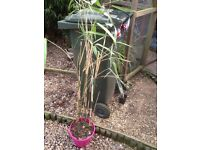 Assorted large bamboo plants
