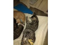 2 boy kittens available