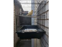 male canary and cage for sale