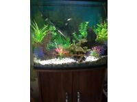 75 Ltr Tropical fish tank,stand and all accessories