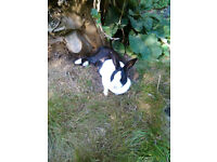 My black and white rabbit has disappeared =:X(