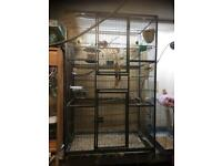 Large bird cage and zebra finches
