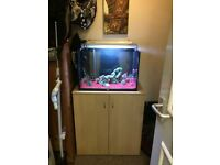 2ft fish tank with stand full tropical setup