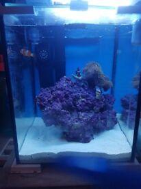 20l Nano Aquarium