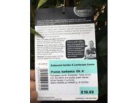 Prunus Lusitanica 26x 4-5ft ideal for hedging