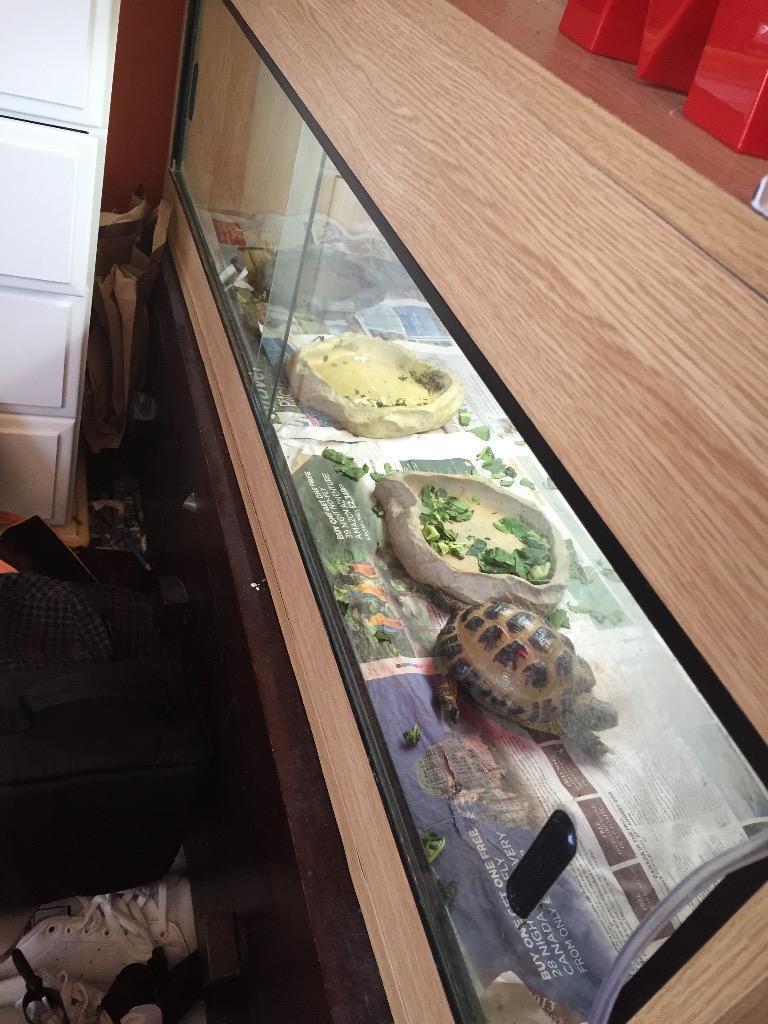Horsefield Tortoise Vivarium Outdoor Run And Tortoise Table In Shepperton Surrey Gumtree