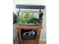 Fishtank and Accesorizes For Sale