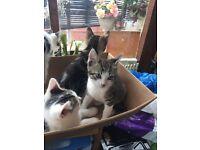 Kittens x 4