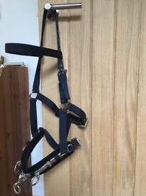 Leather show head collar, Lunge cavesson , Be Kind head collar all full size