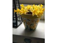Household garden plant pot