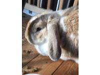 Rabbits for rehoming £40