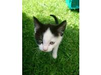 Kitten,boy