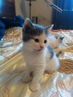 Kittens looking for a loving home.