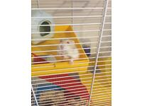 Hamster and cage plus accessories