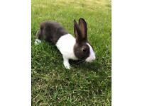 4 10 week old rabbits