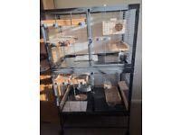 Chinchilla/rat cage