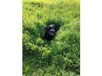 Dog walker in Barnet,£9