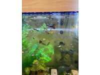 Exotic guppies and snails