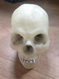 London Dungeon Glow in the Dark Plastic Skull