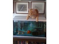 Fish Tank / Aquarium - Cat not included :)