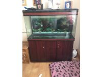 4ft fish tank with filtter