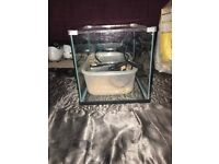 Fish tank and filter and heater