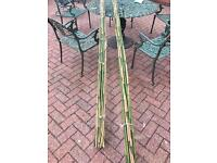 Bamboo canes/sticks