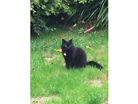 Beautiful black female cat - Free to loving home (I will sponsor her)