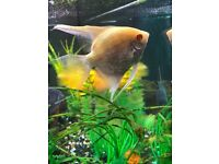 JWEL 180 TROPICAL FISH TANK WITH FISH FOR SALE