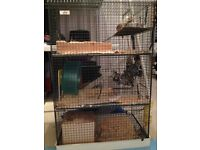 Two degus with cage and extras