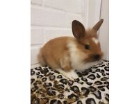 Baby rabbits need good homes NO TIME WASTERS